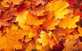 Autumn term starts September 19th